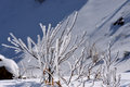 Winter rime Royalty Free Stock Images