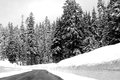 Winter road 库存照片