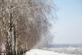 Winter road and birch tree Stock Image