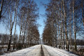 Winter road among birches. Royalty Free Stock Photo