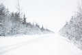 Winter road in a forest Stock Photos