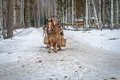 Winter road with a horse in the Royalty Free Stock Photos