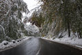 Winter road a in mountain through middle of the forest Stock Image