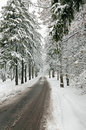 Winter road in snow-covered forest Stock Photos