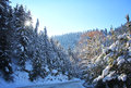 Winter road to mountain snow with fir tree Royalty Free Stock Photography