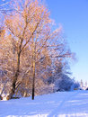 Winter road and trees covered by snow Royalty Free Stock Photos