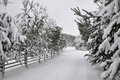 Winter road with a wooden fence and fir trees on both sides of the road.
