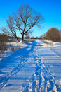 Winter rural landscape. Royalty Free Stock Image