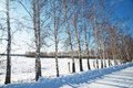 Winter in russia the birch grove Stock Image