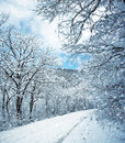 Winter scene Stock Image