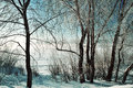 Winter scene -frosty snowy trees near the river at the winter sunrise Royalty Free Stock Photo