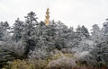 Winter scene at mt emei of the golden buddha mountain Stock Photo