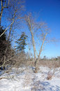 Winter scene in new england a at white memorial litchfield connecticut Stock Photos