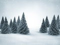 Winter scene snow and green pine trees Royalty Free Stock Photos