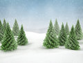 Winter scene snow and pine trees blue sky green Royalty Free Stock Photography