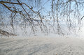 Winter scenery of empty brunches of plane tree on frozen lake Royalty Free Stock Photography