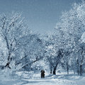 Winter scenery in park snowstorm on nature and Stock Image