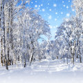 Winter scenery snowstorm in park with trees in sunny cold day Royalty Free Stock Photography