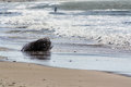 Winter seascape Royalty Free Stock Photo