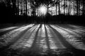 Winter shadows is a black and white low key landscape photo of elongated across the snowy field at sunset Royalty Free Stock Photo