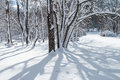 Winter shadows tree on the freshly fallen snow in this park in central new jersey Stock Photo