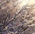 Winter snow on the branches of a tree Royalty Free Stock Photo
