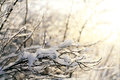 Winter, snow on the branches of a tree, patterns Royalty Free Stock Photo