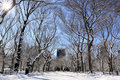 Winter Snow in Central Park Stock Photography