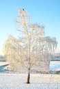 Winter snow-covered birch in strong frost with blue sky Stock Images