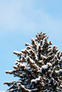 Winter snow covered fir trees Stock Photos