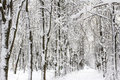Winter snow-covered forest landscape Stock Image