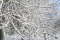 Winter: Snow Covered Tree Branches, Outdoors Stock Image