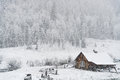 Winter snow falling on log cabin in san isabel national forest Royalty Free Stock Photo