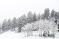 Winter snow falling on san isabel national forest Royalty Free Stock Photo