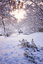 Winter snow forest Royalty Free Stock Photo
