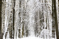 Winter snow forest landscape Royalty Free Stock Photo