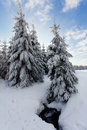 https---www.dreamstime.com-stock-photo-christmas-fairy-tale-snow-scenary-winter-cloudy-landscape-snow-ground-frost-branches-bushes-winter-image111344705