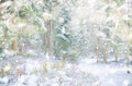 Winter snow magic forest background. Royalty Free Stock Photo
