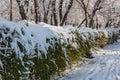 Winter Snow Park Trees