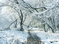 Winter snow and trees. Royalty Free Stock Photography