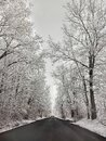 Winter Snow Trees, Park Road Perspective, White Alley Tree Rows Royalty Free Stock Photo