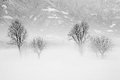 Winter solitude a landscape with snow and fog concept Royalty Free Stock Images