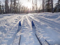 Winter sport X-country skis in sunny forest tracks Royalty Free Stock Photo
