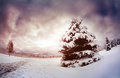 Winter spruce in mountains scenic with the mountain park at dramatic sky kazakhstan Stock Image