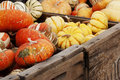 Winter squash and gourds a variety of including turban festival hubard in wooden crates Royalty Free Stock Photos