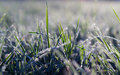 Winter Is Starting, Morning Frost On The Grass.
