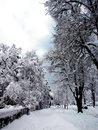 Winter in the street with trees and buildings covered with snow Stock Photos