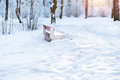 Winter Sunny day in snow Park Royalty Free Stock Photo