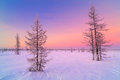 Winter sunrise landscape with glowing red sky. Panorama of winter forest in snow Royalty Free Stock Photo