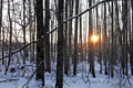 Winter sunset in the forest estonia Stock Photo